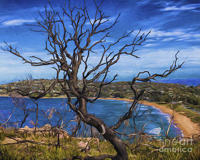 Dead Tree At Barrenjoey Headland Poster by Avalon Fine Art Photography