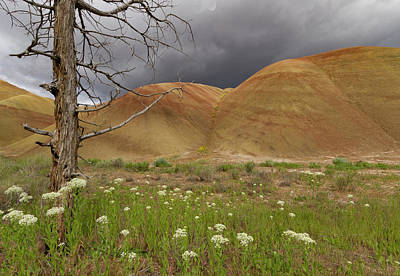 Dead Tree At Painted Hills Poster by Jean Noren