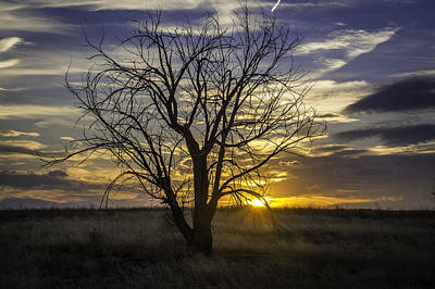 Dead Tree At Sunset Poster by Trish Kusal