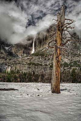 Dead Tree In Yosemite Valley Poster