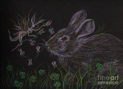 Poster featuring the drawing Dearest Bunny Eat The Clover And Let The Garden Be by Dawn Fairies