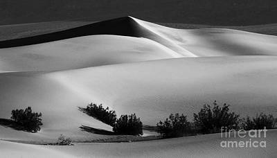 Death Valley California Mesquite Dunes Poster by Bob Christopher