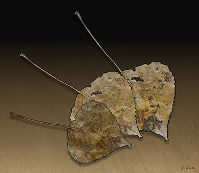 Poster featuring the photograph Decaying Leaves by Joe Bonita