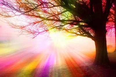 December Fog By The Sleepy Pin Oak Rainbow Burst Poster
