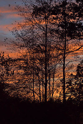 December Sunset In Frog Pond Woods Poster by Maria Suhr