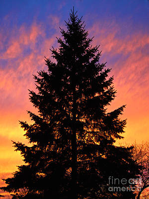 Poster featuring the photograph December Sunset by Mark Miller