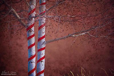 Decorated Aspens Poster by Elena E Giorgi