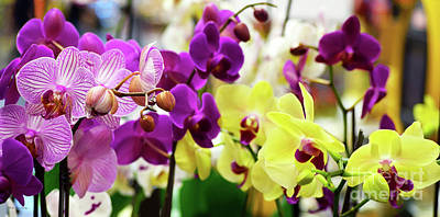 Poster featuring the photograph Decorative Orchids Still Life B82418 by Mas Art Studio