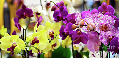 Poster featuring the photograph Decorative Orchids Still Life C82418 by Mas Art Studio