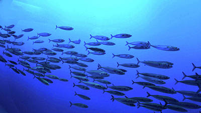 Poster featuring the photograph Deep Blue by Pacific Northwest Imagery