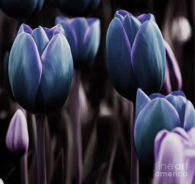 Deep Calla Flower Poster