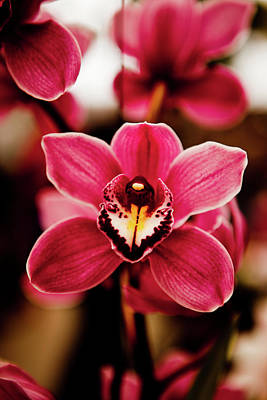 Deep Cut Orchid Society 15th Annual Orchid Show Poster by Dan Pfeffer