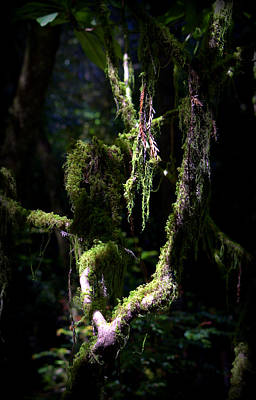 Poster featuring the photograph Deep In The Forest by Lori Seaman