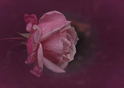 Deep Pink Nov Rose Poster