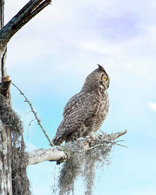 Deep Thoughts Of The Great Horned Owl Poster by Mark Andrew Thomas