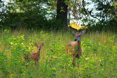 Deer And Fawn Poster by John Burk