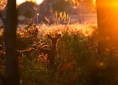 Deer At Ojibway Park Poster
