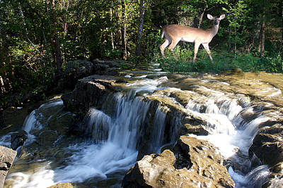 Deer At The Falls Poster by Rick Friedle