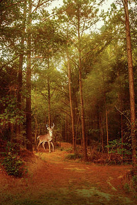 Poster featuring the photograph Deer In Morning Light by Barry Jones