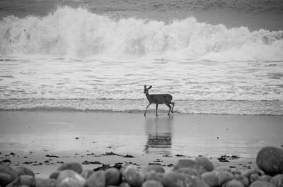 Deer In Ocean Black And White Poster