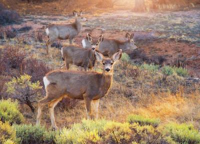 Deer In The Sunlight Poster by Darren White