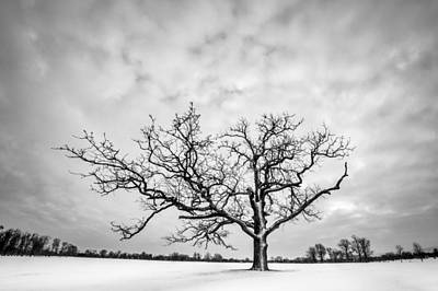 Poster featuring the photograph Delaware Park Winter Oak by Chris Bordeleau