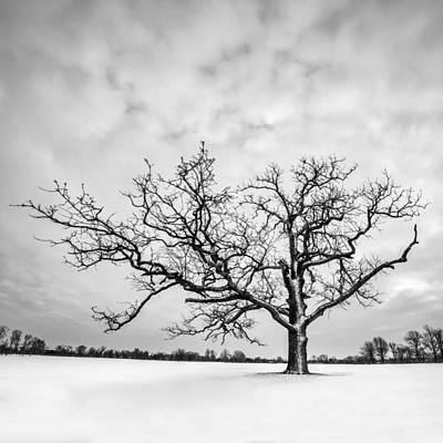 Poster featuring the photograph Delaware Park Winter Oak - Square by Chris Bordeleau
