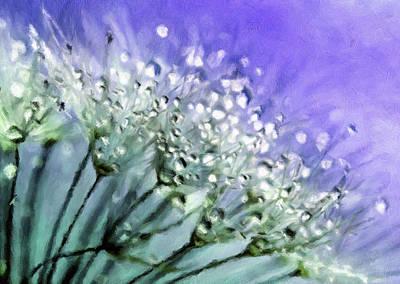 Delicate Dandelions Poster