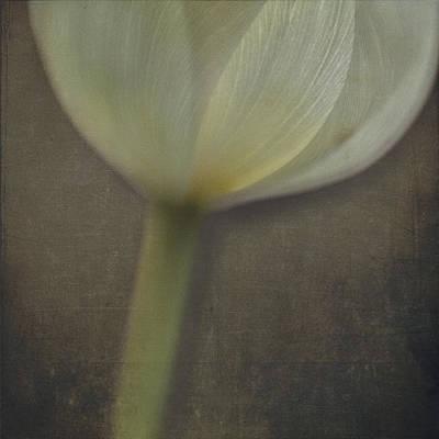 Delicate Goblet Poster by Kevin Bergen