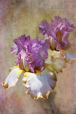 Delicate Gold And Lavender Iris Poster by Phyllis Denton