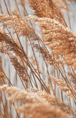 Delicate Grasses In Spring Poster