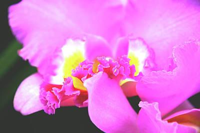 Delicate In Pink Poster by Susanne Van Hulst