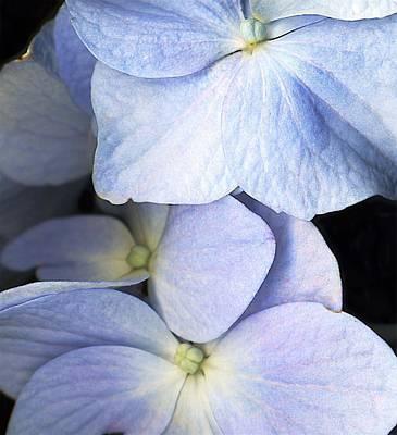 Delicate Petals Poster by Deborah J Humphries