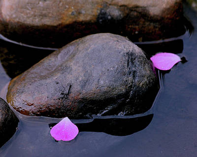 Poster featuring the photograph Delicate Petals With Rocks by Doris Potter
