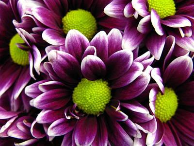 Delicate Purple Poster
