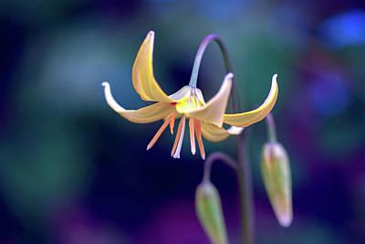 Deliver Me - Perennial - Flower Poster