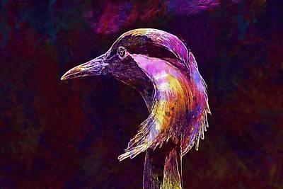 Demoiselle Crane Bird Zoo Wildlife  Poster