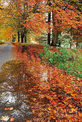 Derbyshire Leafy Lane Poster