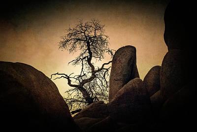 Desert Bonsai II Poster