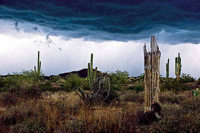 Desert Cactus Storms At The Superstitions Mountains Poster by Dave Dilli
