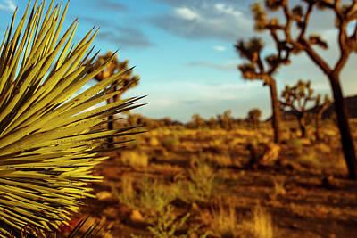 Desert Fan Poster