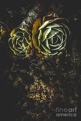 Desert Flowers Poster