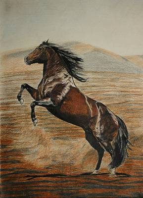 Poster featuring the drawing Desert Horse by Melita Safran