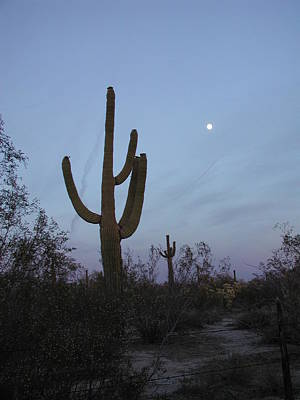 Poster featuring the photograph Desert Moon by Nancy Taylor