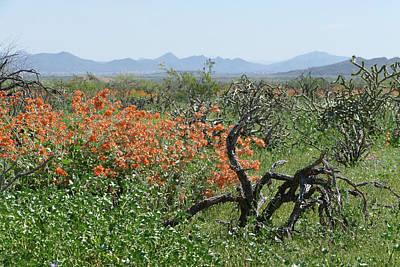 Desert Orange Poster by Laurel Powell