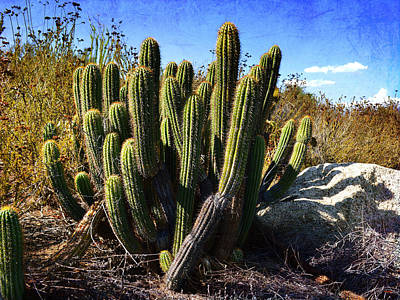 Poster featuring the photograph Desert Plants - The Wild Bunch by Glenn McCarthy