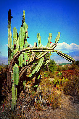Poster featuring the photograph Desert Plants - Westward Ho by Glenn McCarthy