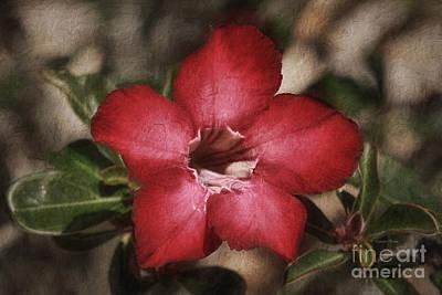 Desert Rose In Daytona Poster by Deborah Benoit