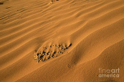 Desert Sand Dunes.  Poster