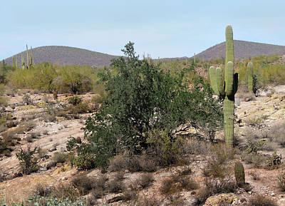 Desert Scrub Poster by Gordon Beck